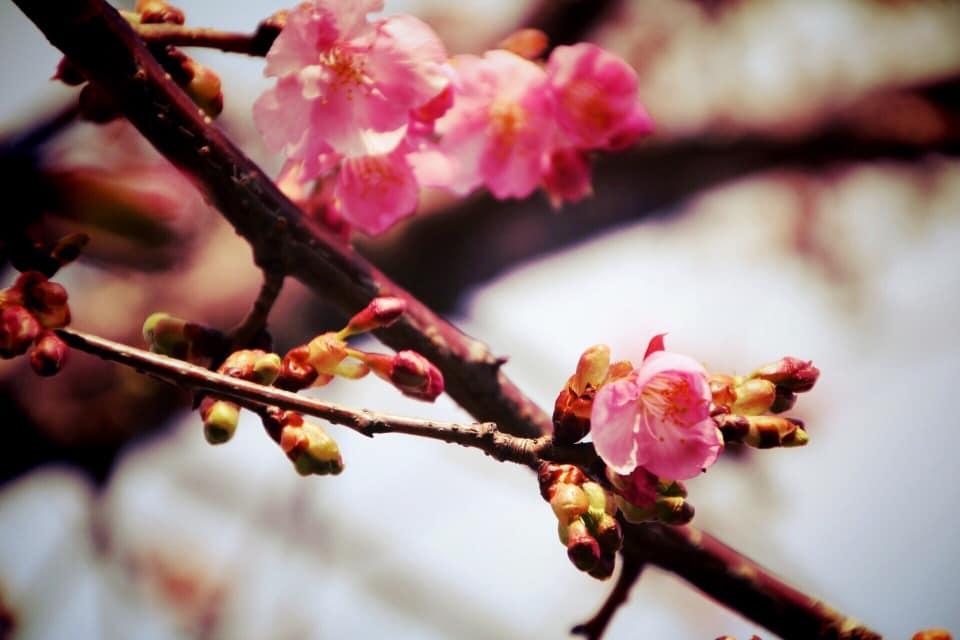 小江戸川越春まつり 2019 | デイリーさんの街案内
